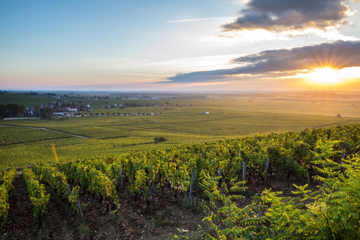 domaine vin cluny